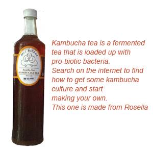 Stomach bacteria and your health Kombucha