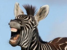 Byron Body and soul  jokes Zebra laughing