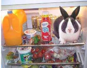 Westinghouse rabbit